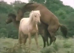 Horses are fucking each other hard while they are outside